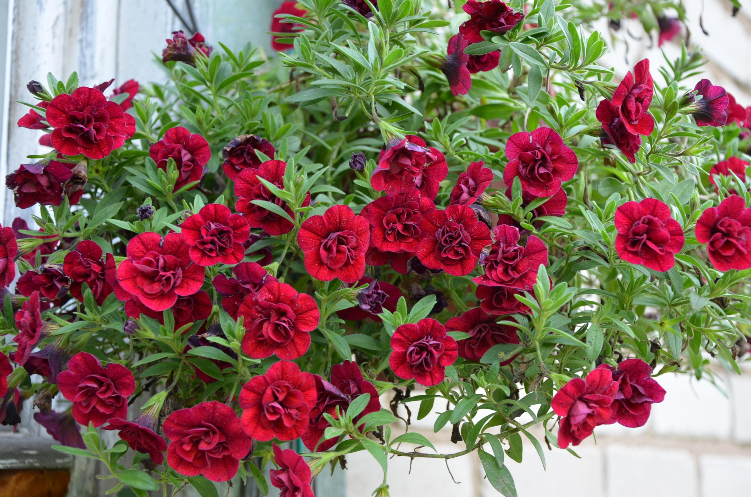 Питомник в иваново цветы